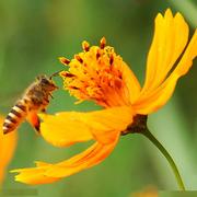 """秋""""蜂""""送爽,蜜蜂身上的那點東西全用上了~"""