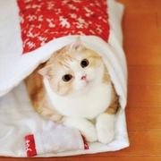 貓咪專用超萌小睡袋