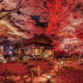 紅葉季暢游日本!Rakuten Travel:精選 日本酒店、民宿等