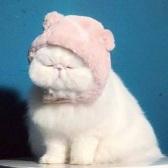 皇家寵物食品旗艦店貓糧免費拿!多品種貓糧/狗糧