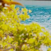 Hilton:精選 奧蘭多 希爾頓酒店