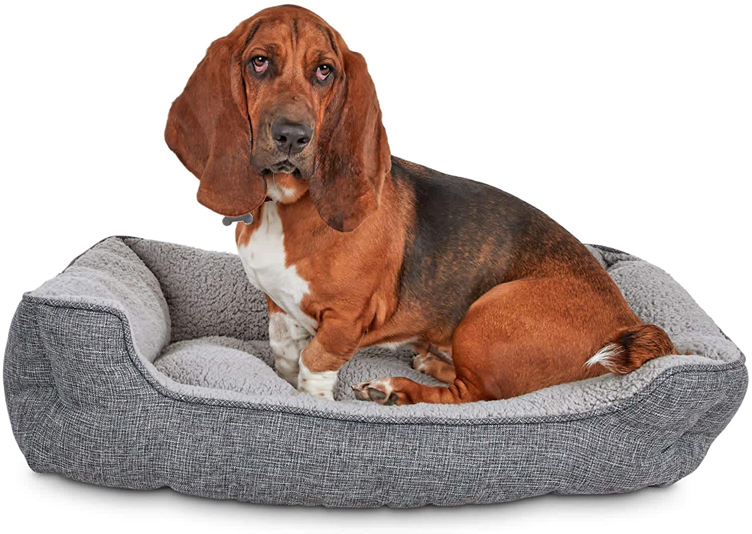 Dog Beds at Petco