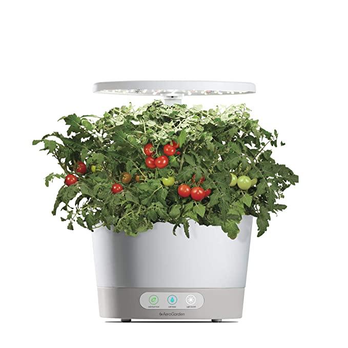 不用大院子在屋里就能种,天天吃新鲜蔬菜!
