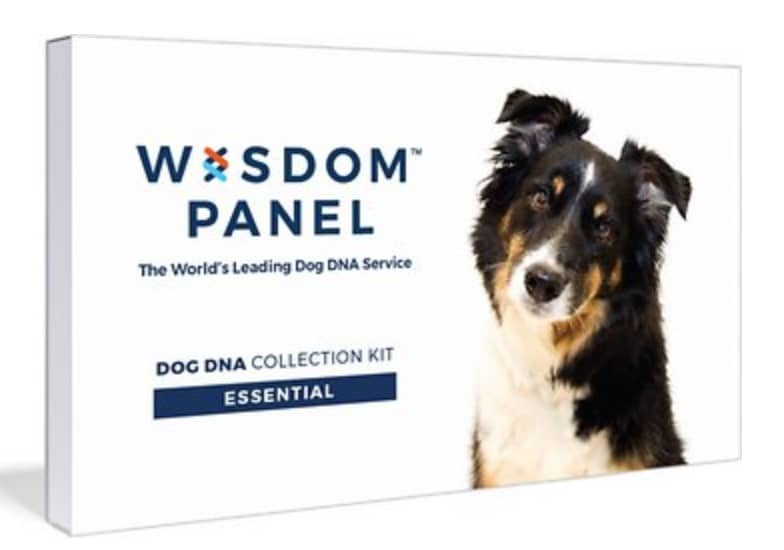 Wisdom Panel Dog DNA Test at Chewy