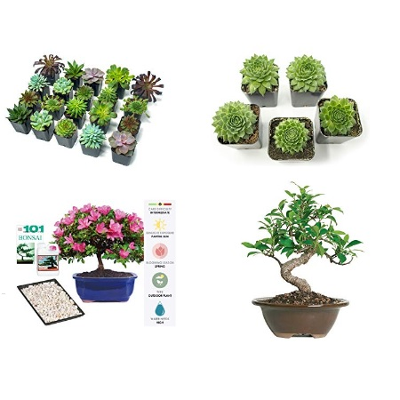 Save 30% on Shop Succulents live plants
