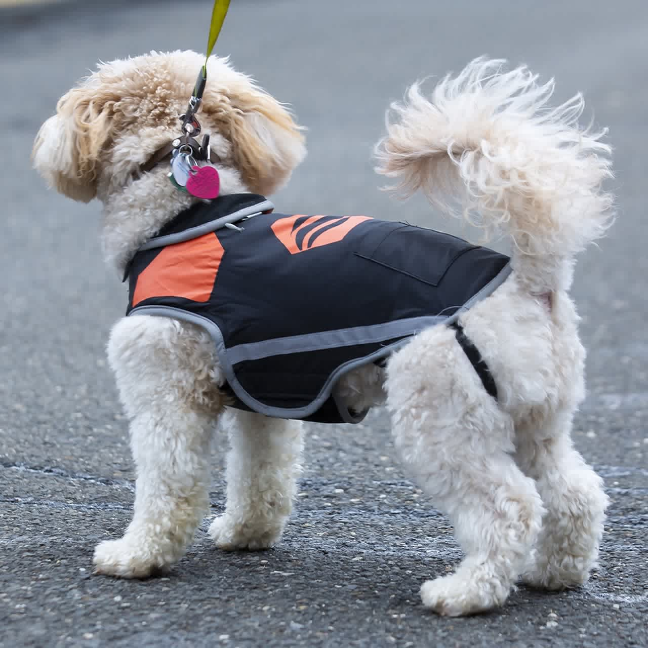 Stay Warm Apparel Rechargeable Heated Dog Vest